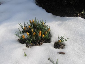 The First Sign of Spring-It is finally here or at least just around the corner.